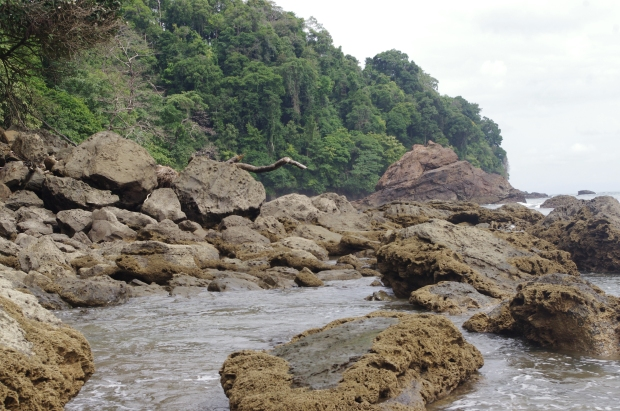 The rocky Pacific coast of southwest Costa Rica backs directly up to the forest .