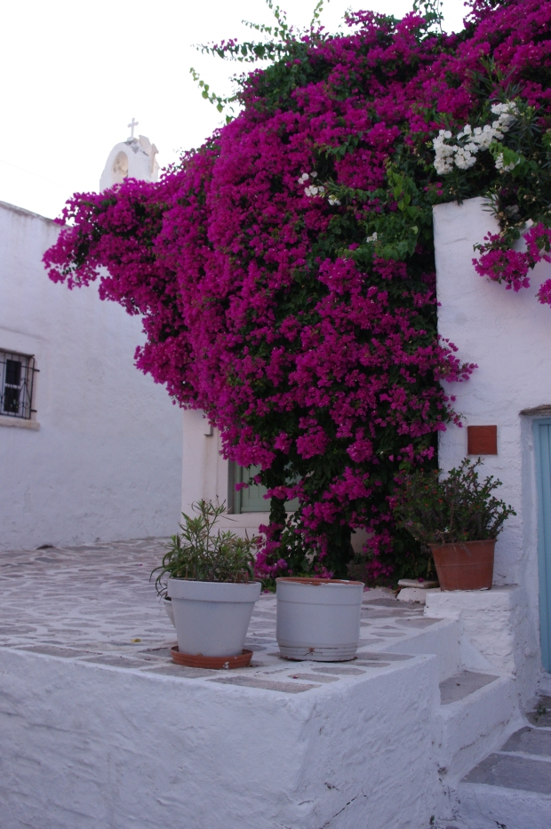 Bougainvillea, Paros, Greece
