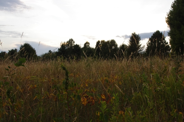 A late summer meadow in northern Michigan.