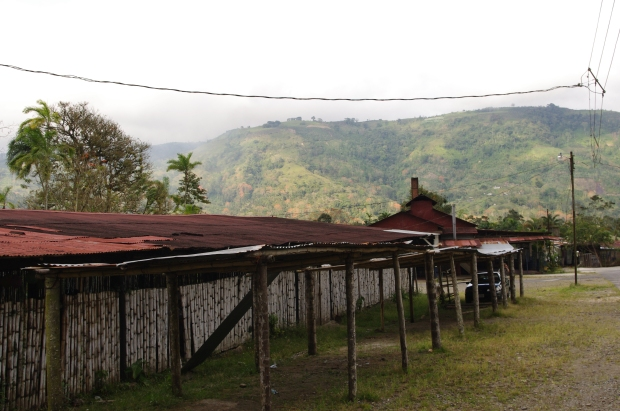 View of a portion of a coffee farm in Costa Rica