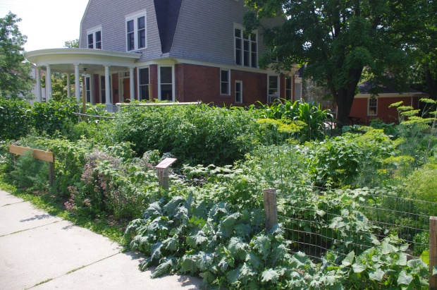 Cultivating Community Garden